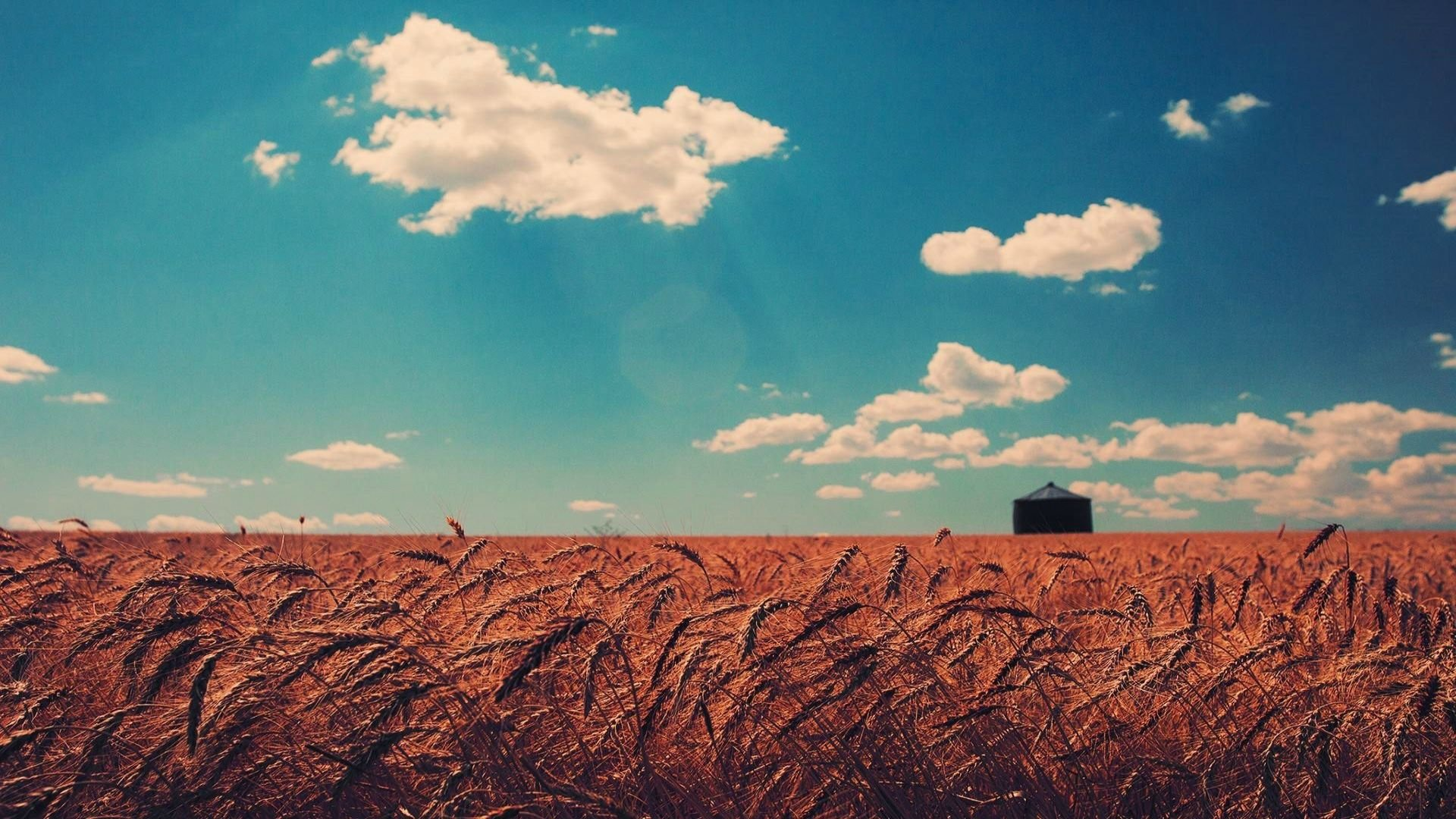 Download Beautiful Combination Of Brown Wheat Field And Blue Sky