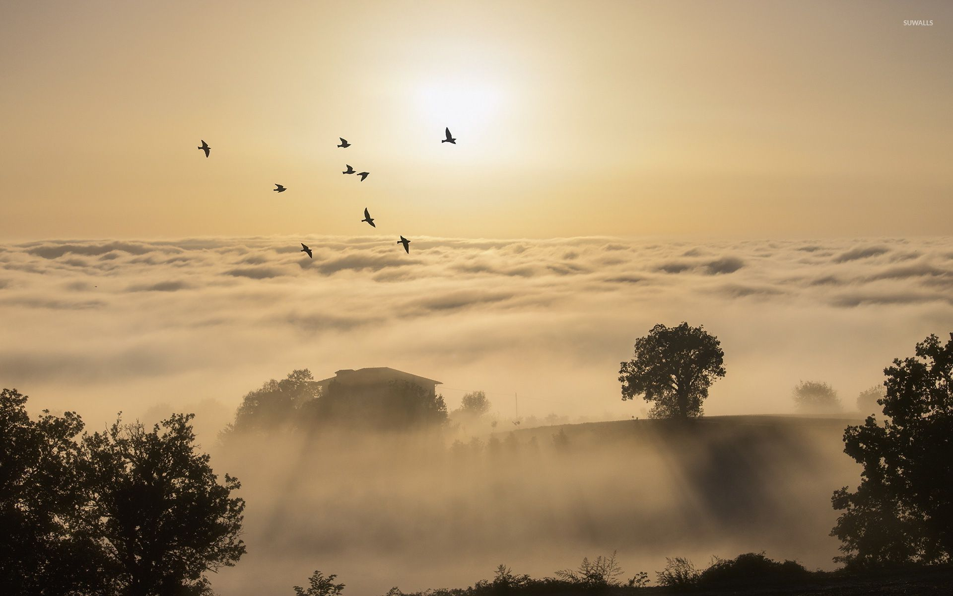 Birds Flying Above The Foggy Hills Into The Sun Light 52882 1920×1200 Wallpaper