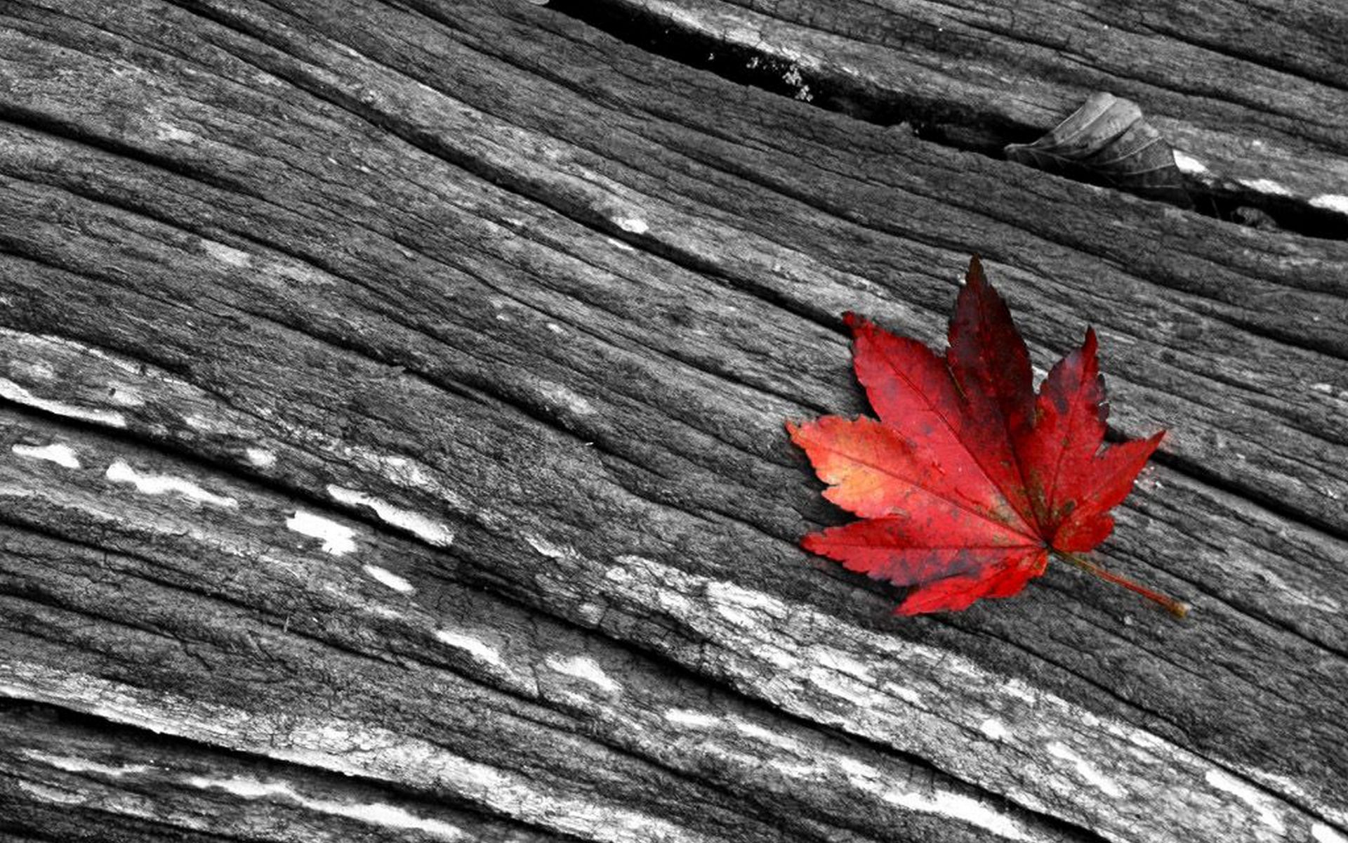 Download Black White And Red Photography Desktop