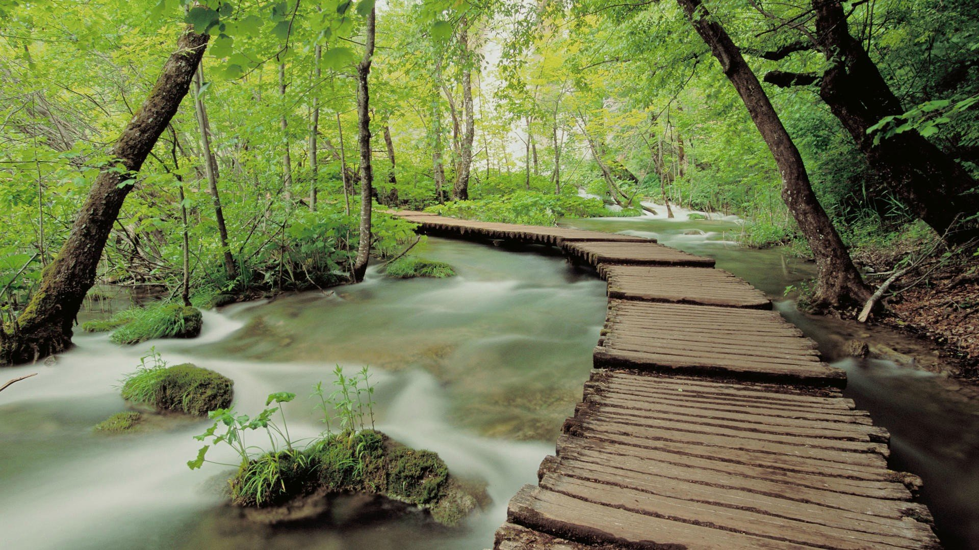 Download Bridge In The Forest