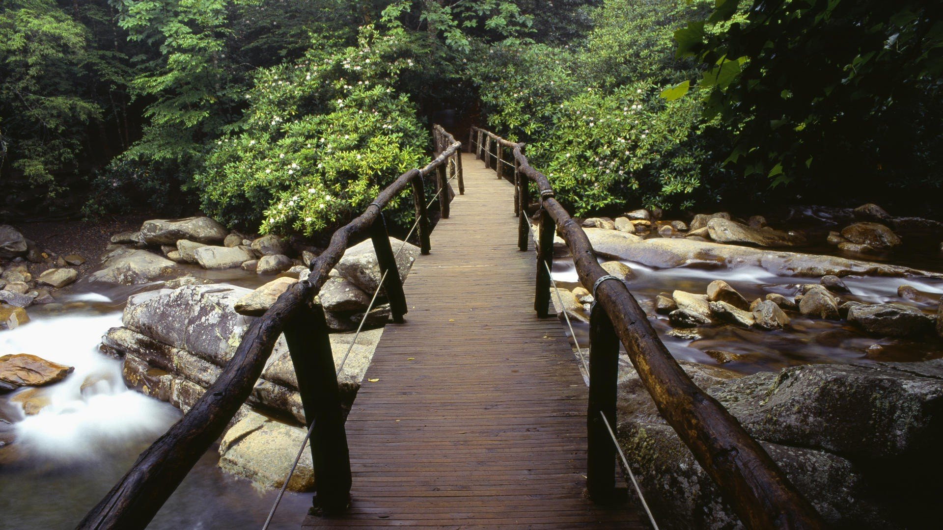 Download Bridge In The Great Smoky Mountains National Park