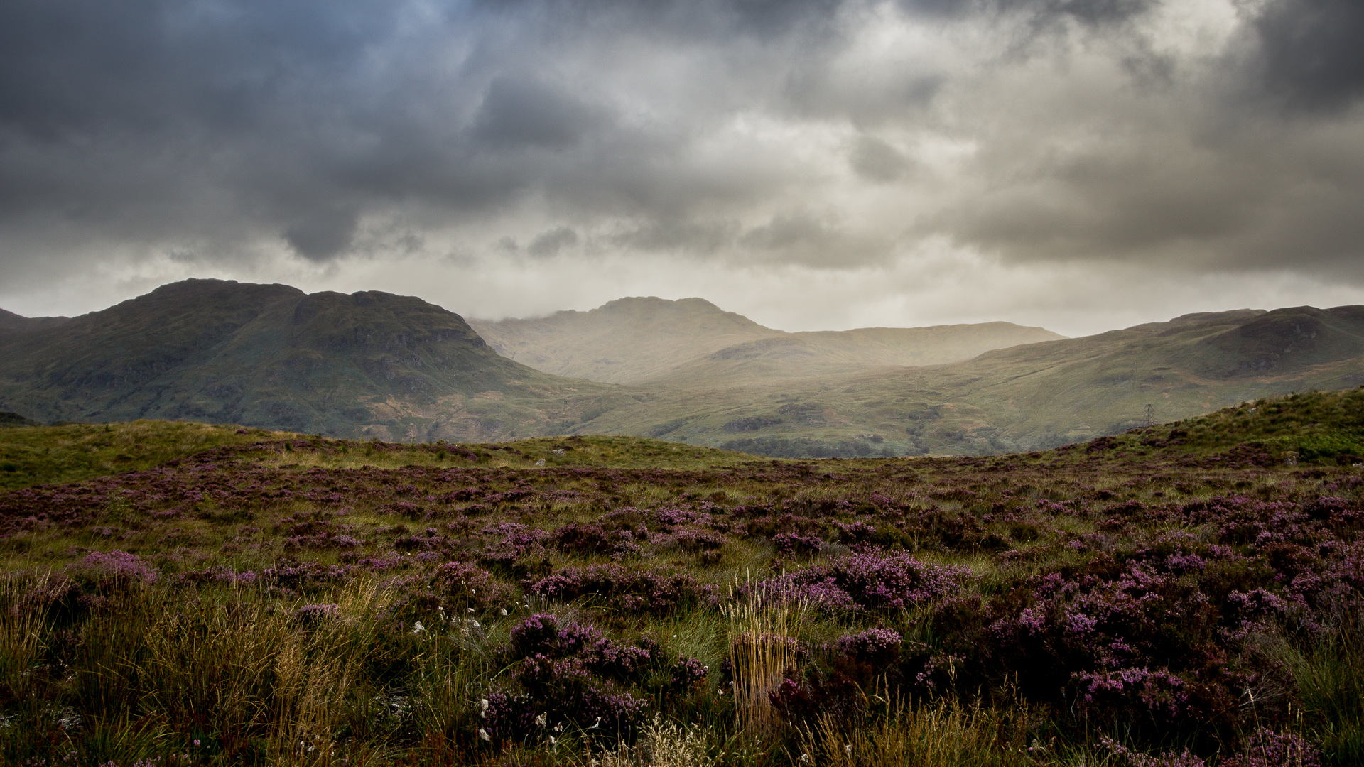 Download Brown Clouds Flowers Gray Green Landscapes Mountains Purple Wallpaper