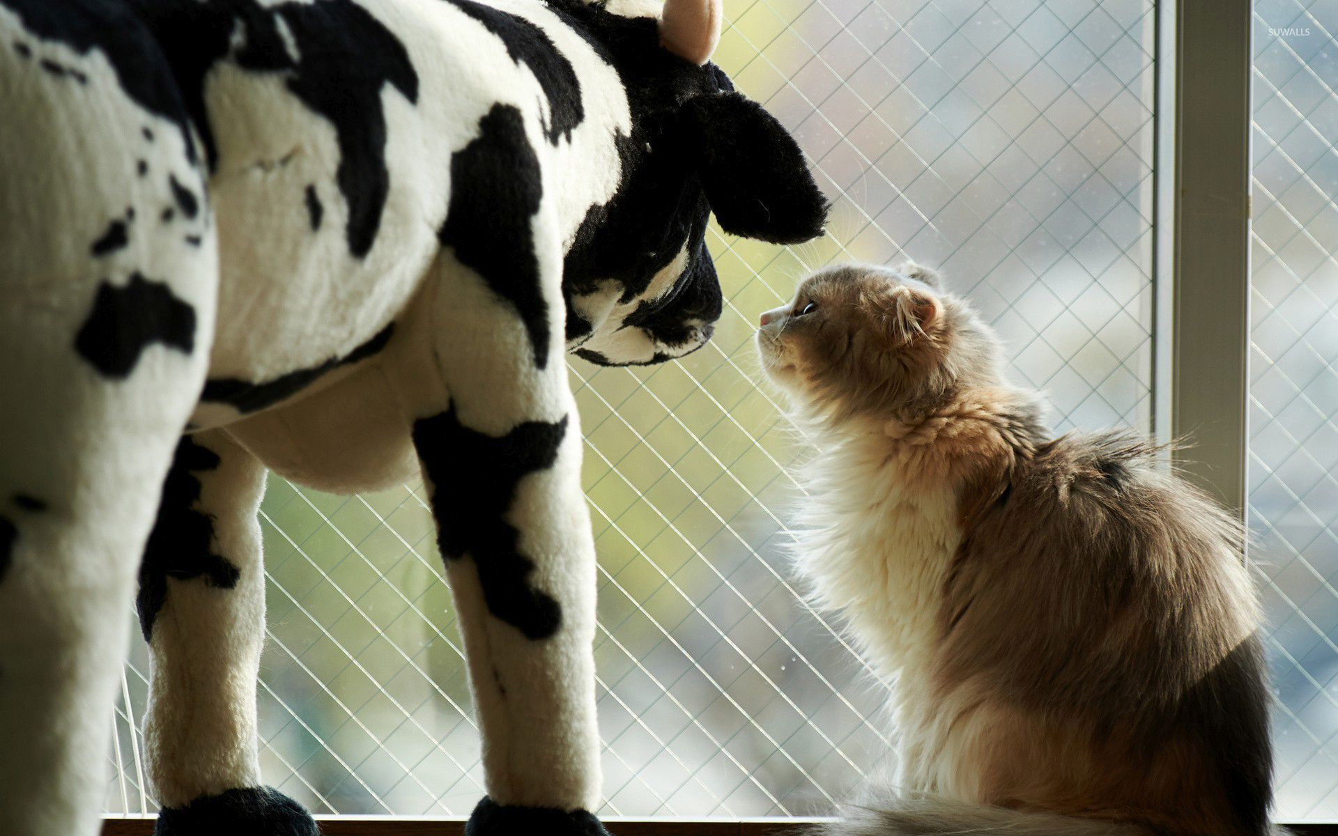 Cat Gazing At A Toy Cow 46585 1920×1200 Wallpaper