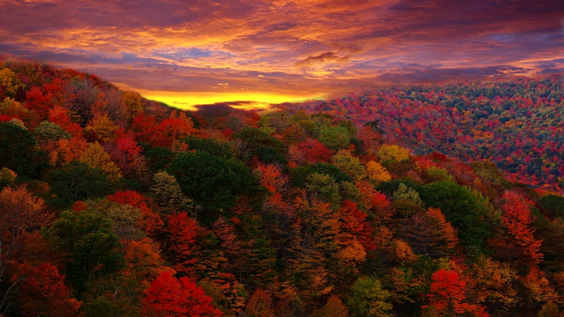 Download Colorful Autumn