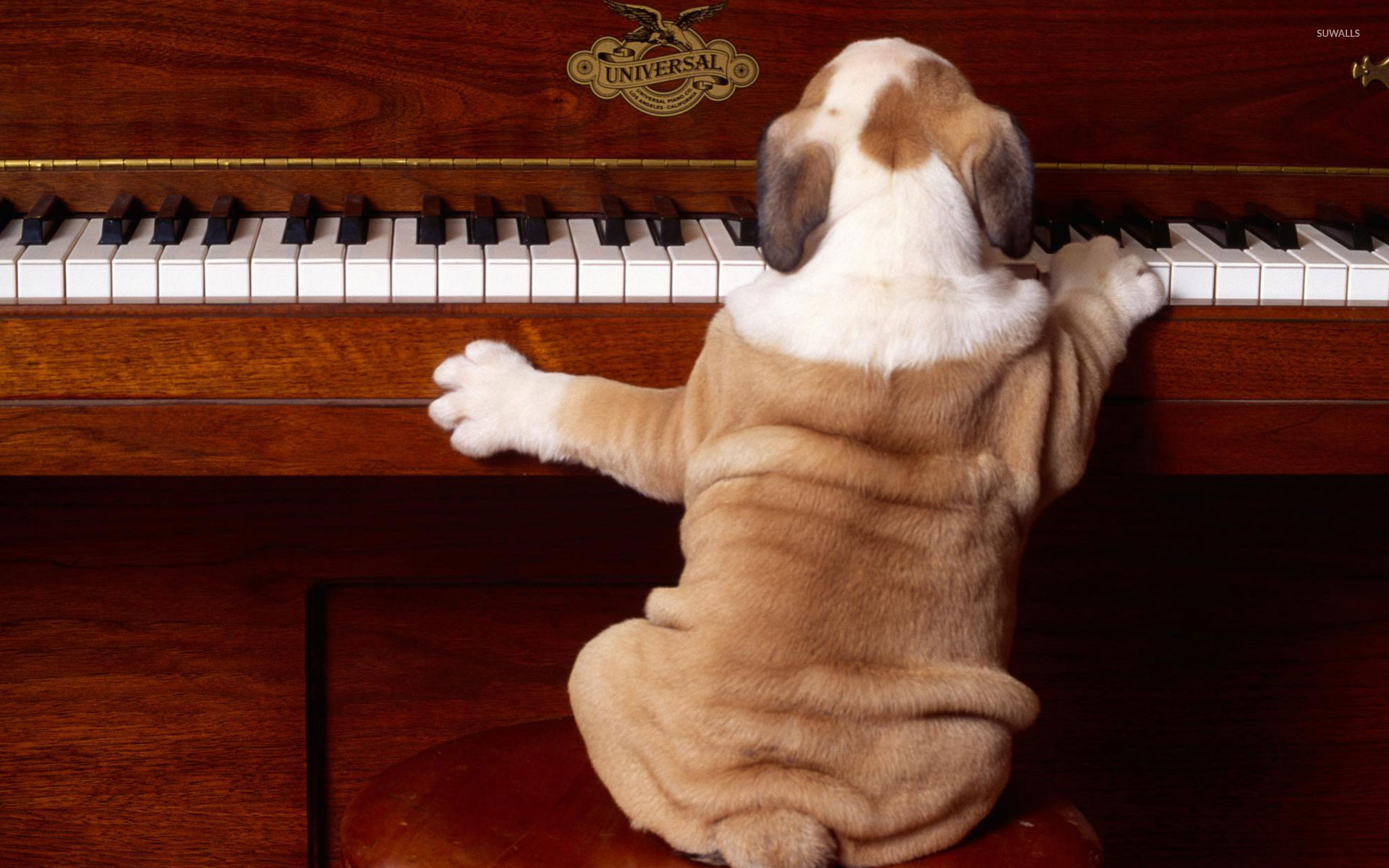 Dog Playing The Piano 39932 1920×1200 Wallpaper