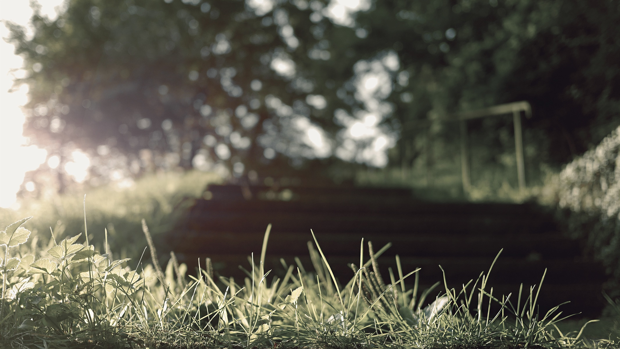 Download Flare Grass Gray Green Sun Trees Wood