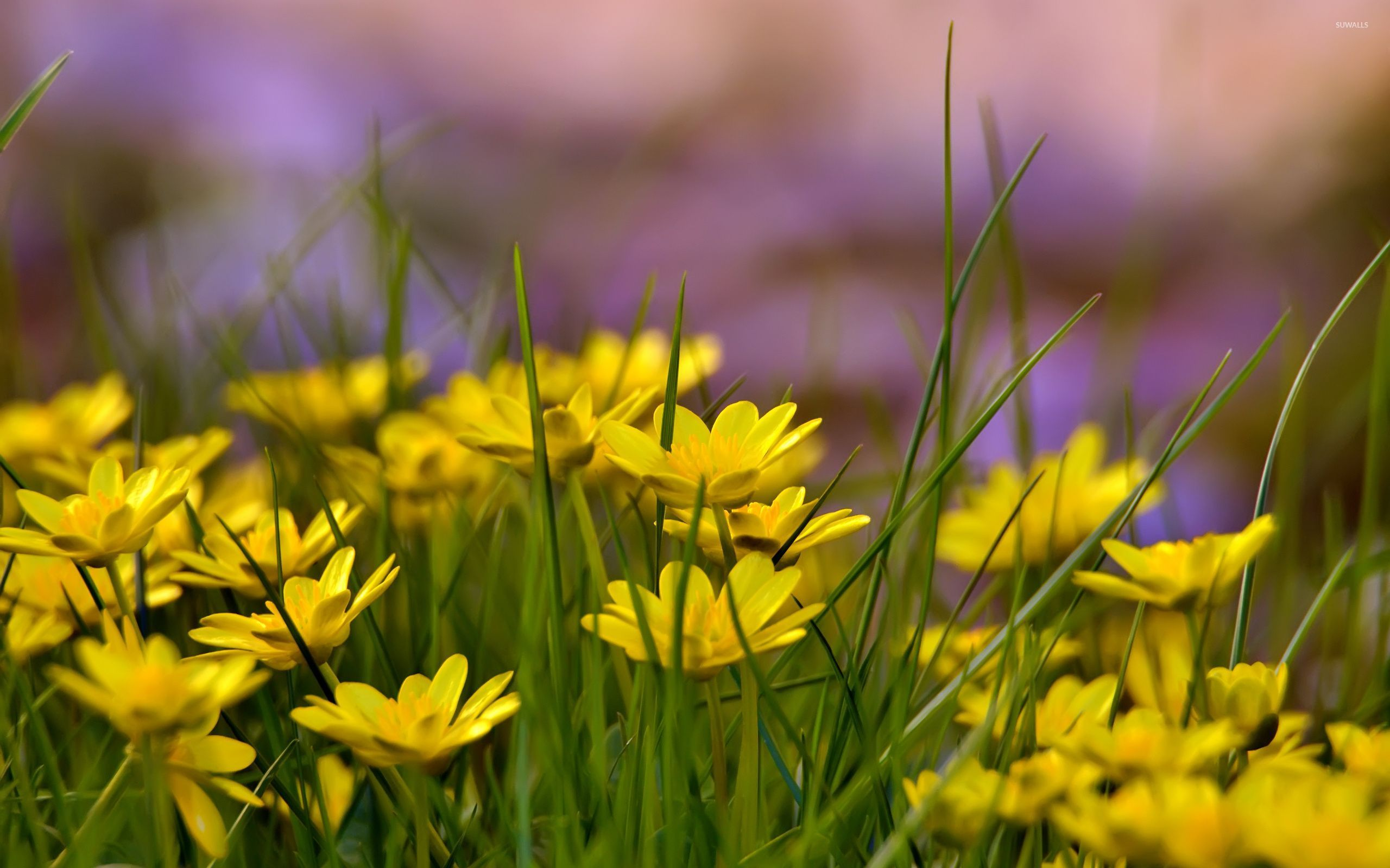 Flowers With Yellow Petals 32614 2560×1600 Wallpaper