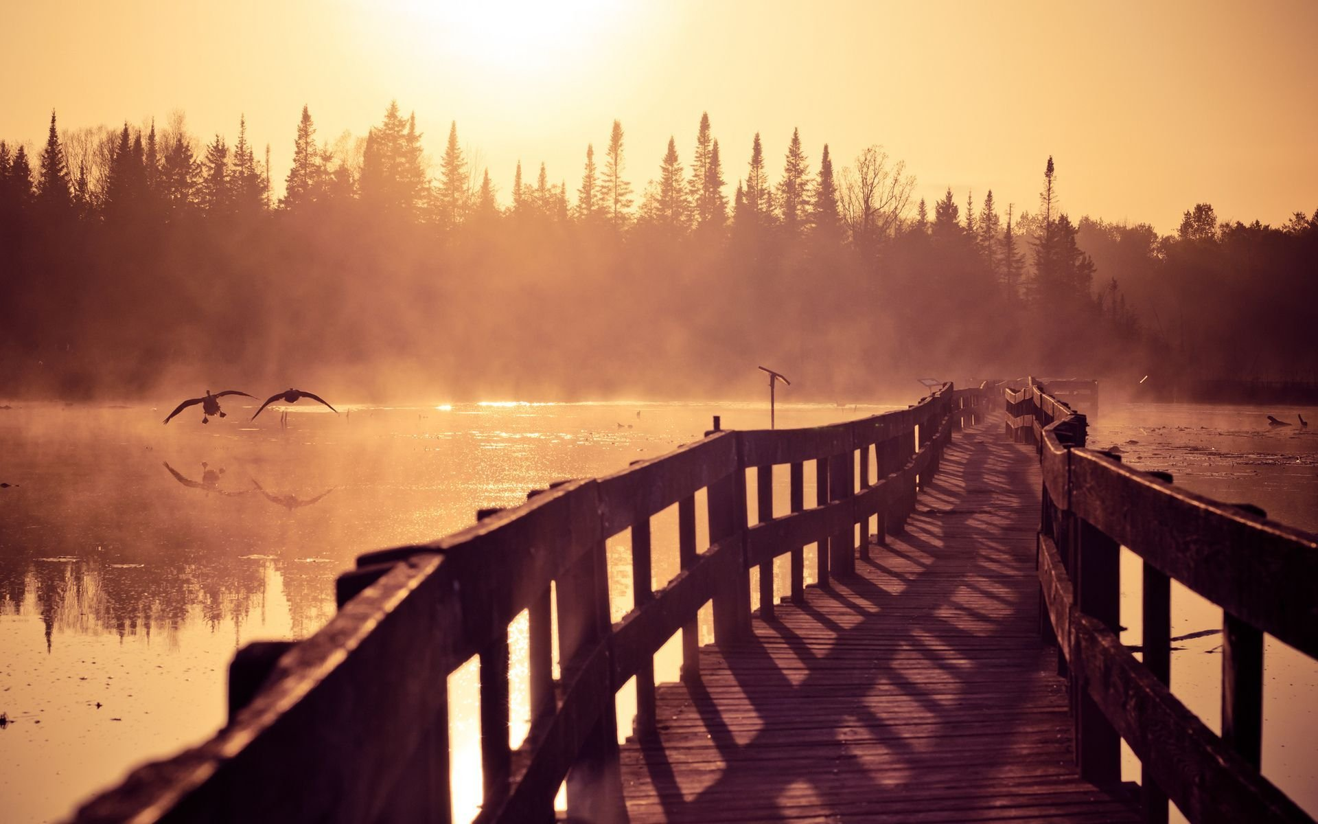 Download Foggy Morning On The Lake  Wallpaper
