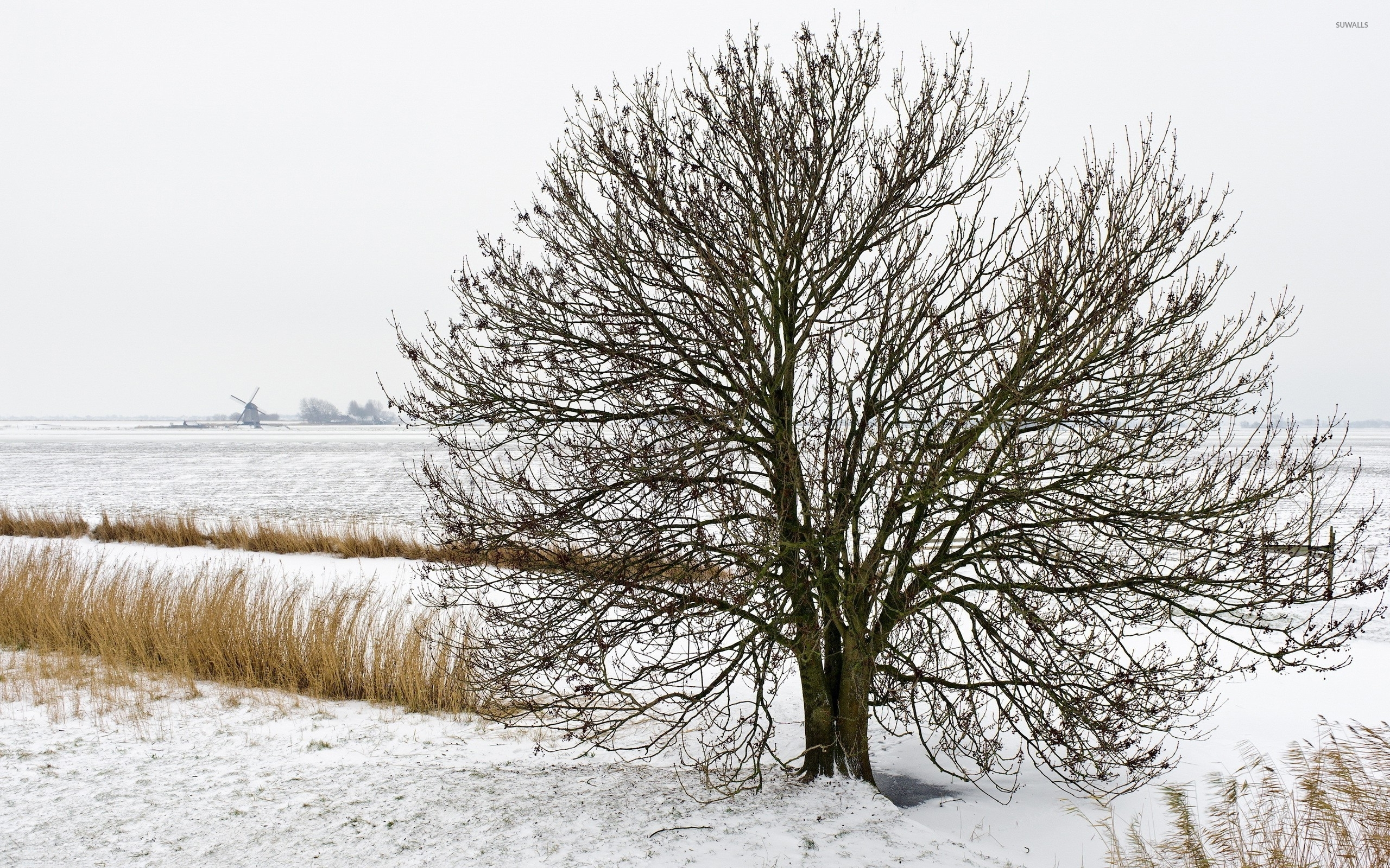 Lonesome-tree-in-the-snowy-nature-2560×1600