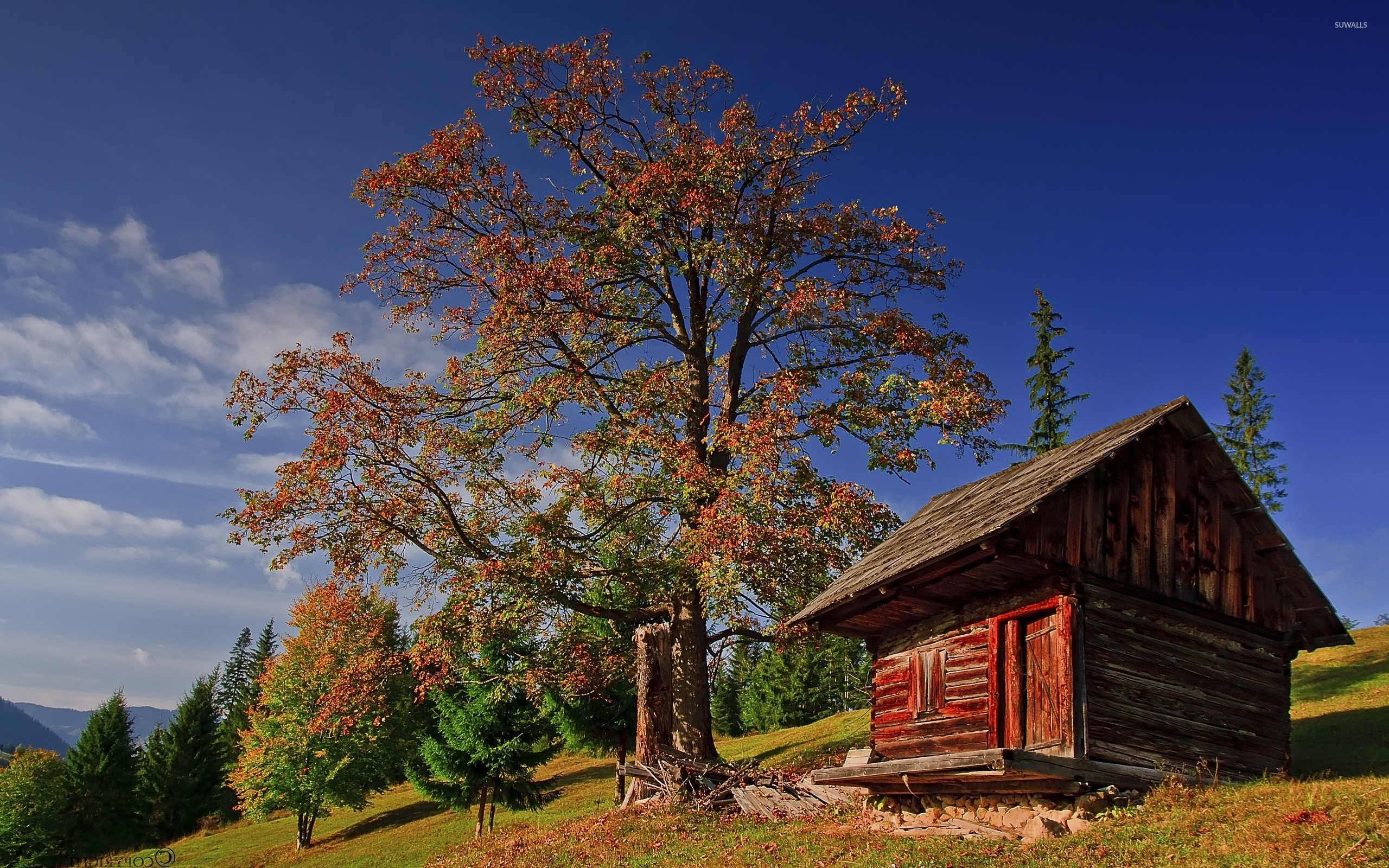 Old-Small-Wooden-House-Under-An-Autumn-Tree-51390-2560×1600-Wallpaper