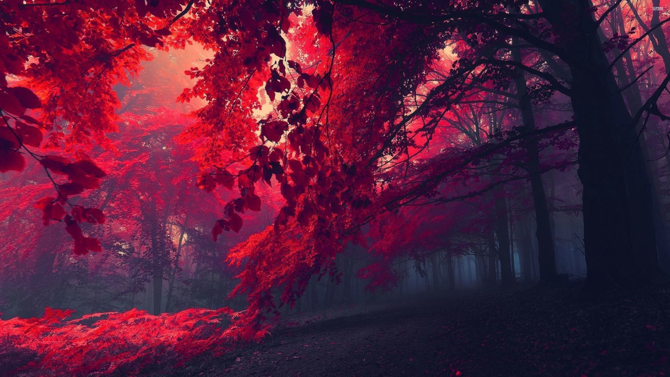 Red Forest 26750 3840×2160