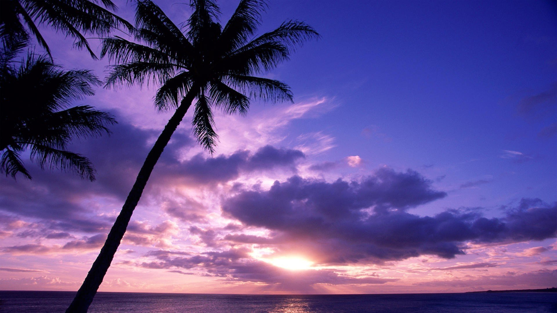 Download Silhouette Trees Beach  Wallpaper