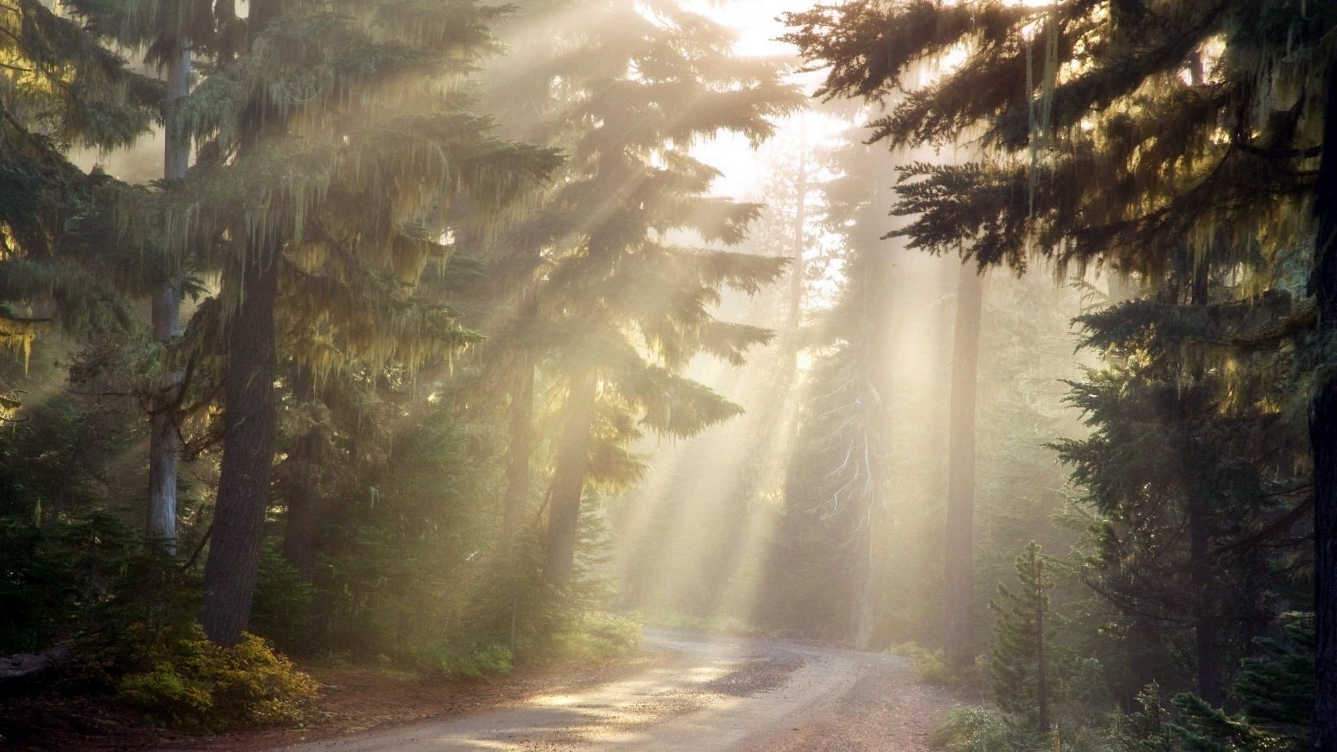 Download Sun Rays In The Forest  Wallpaper
