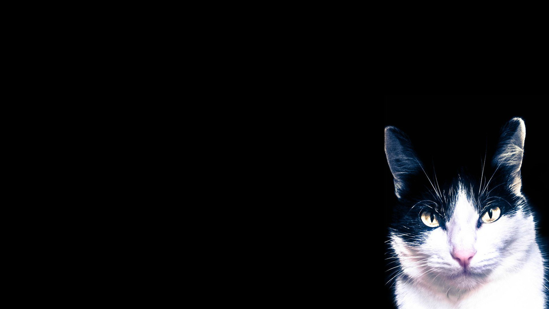 Took A Picture Of My Cat. Wallpaper