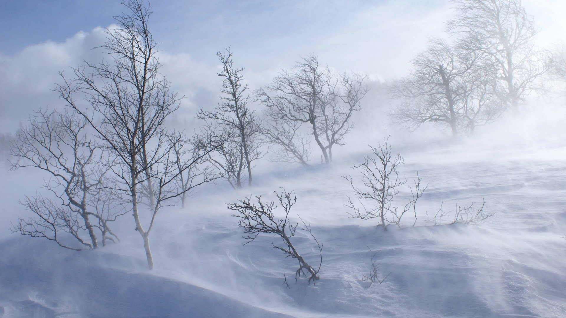 Download White Beauty Light Fog With Sun Light Amazing Impressing Nature  Wallpaper