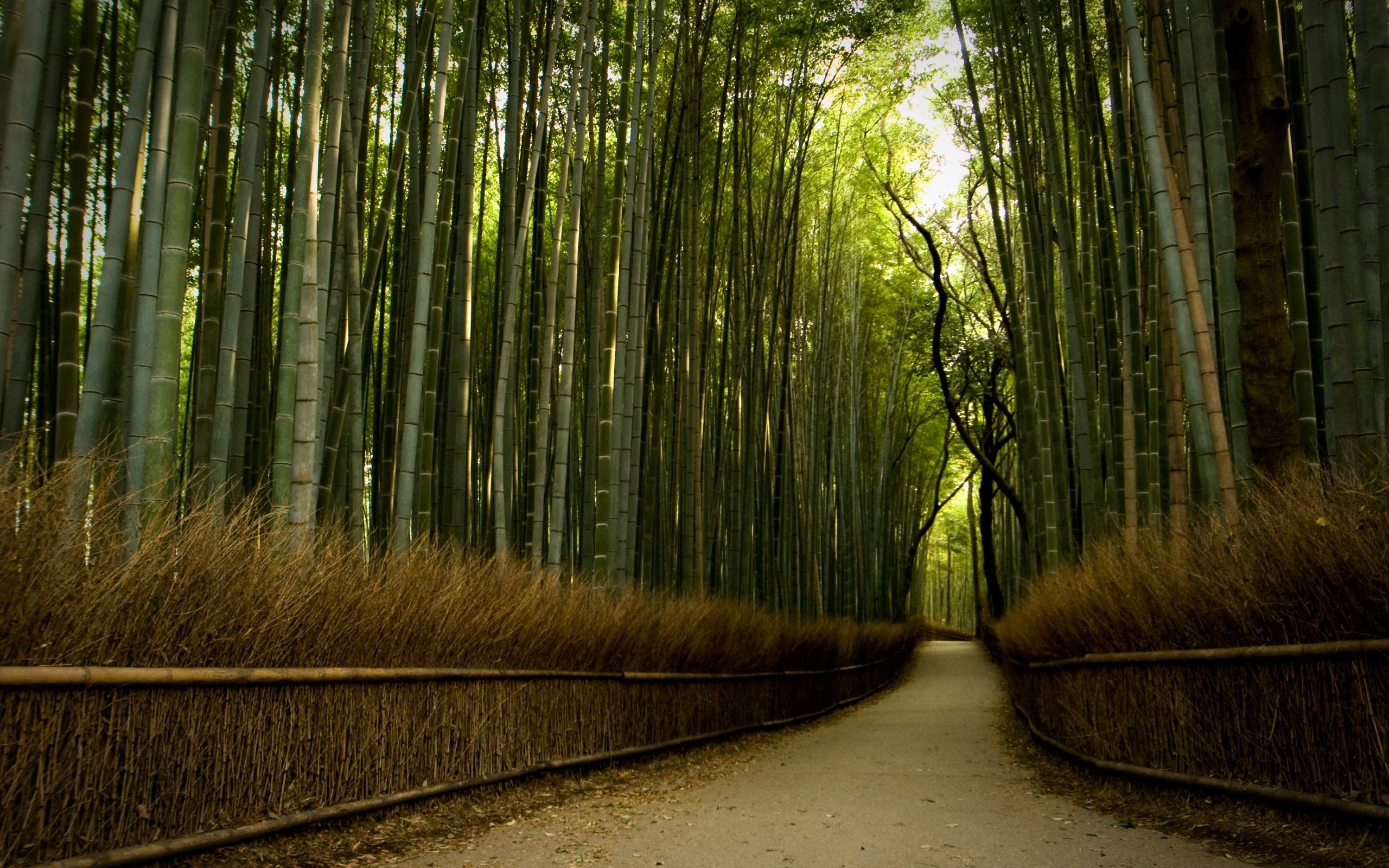 Download Beautiful Path In Bamboo Forest Wallpaper