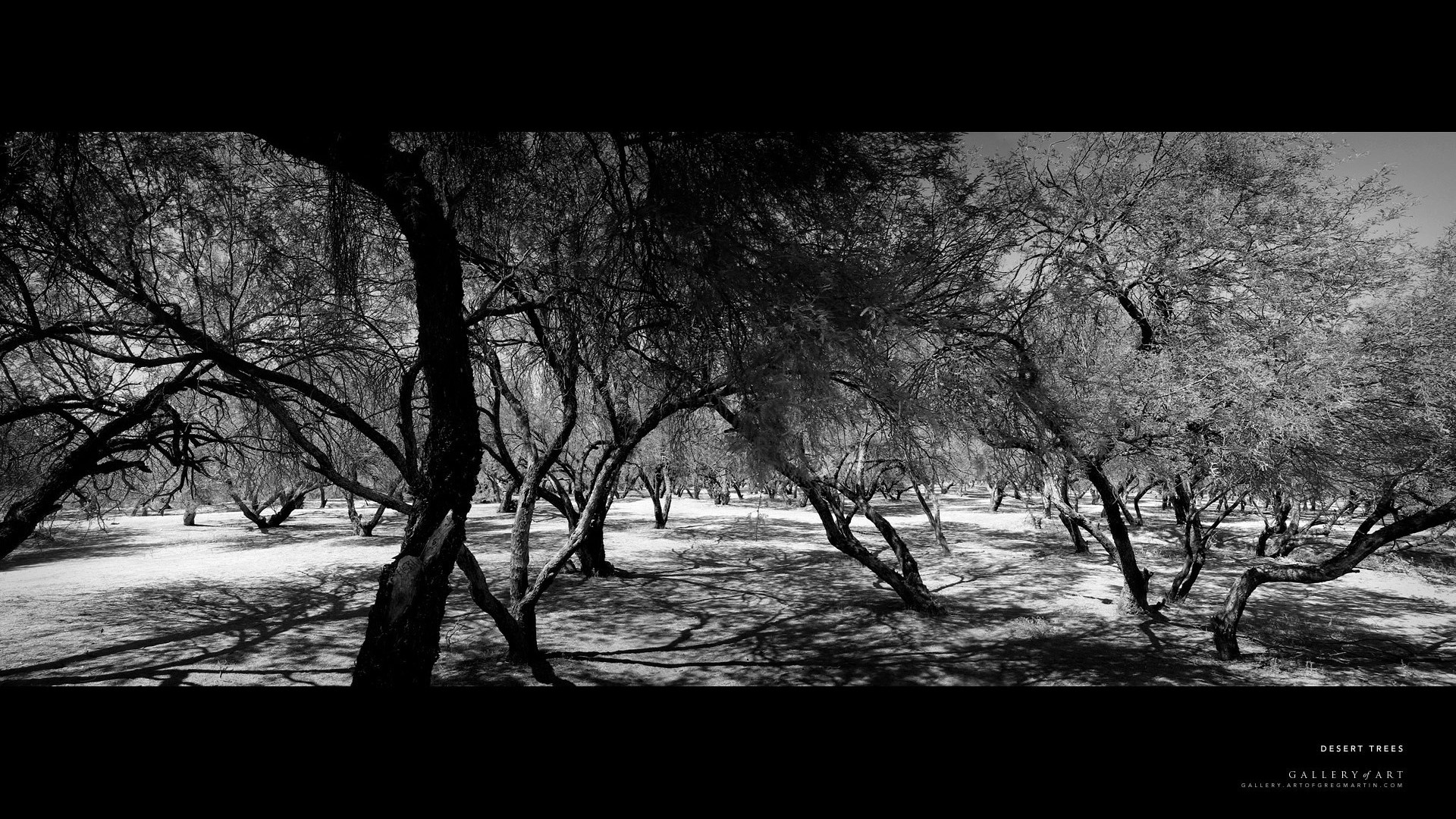 Download Black And White Forest
