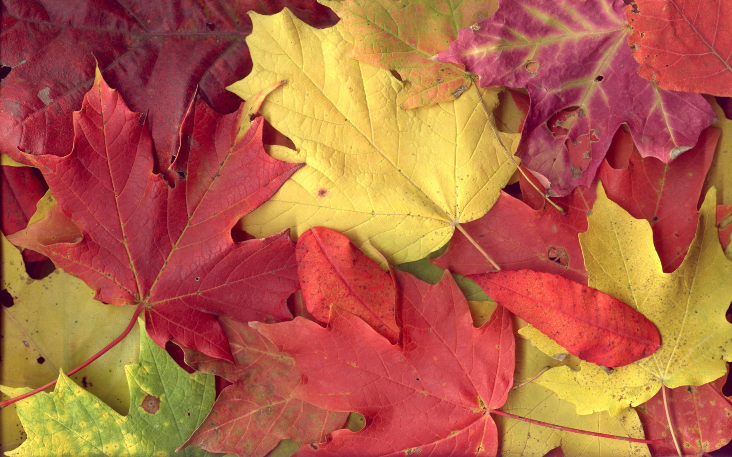 Download Colorful Autumn Wallpaper 001