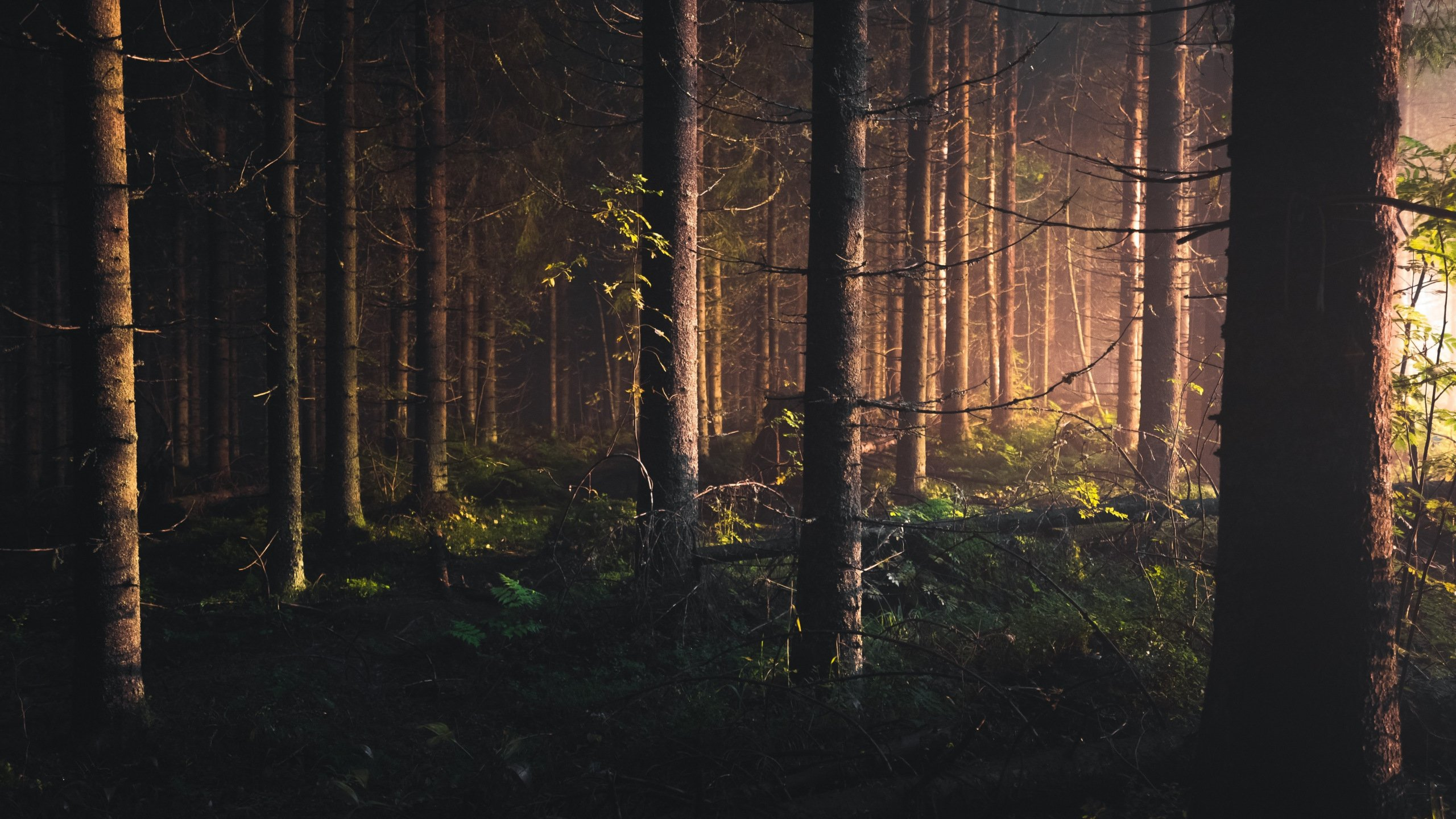 Download Finland Forest Wallpaper