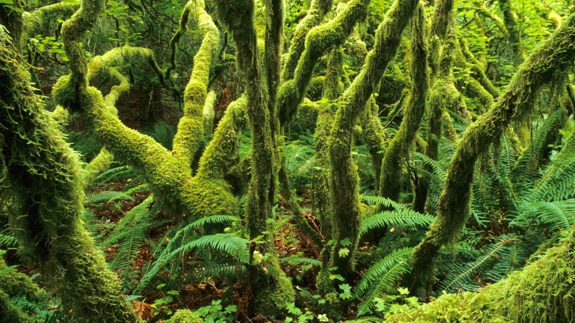 Download Green Forest 003
