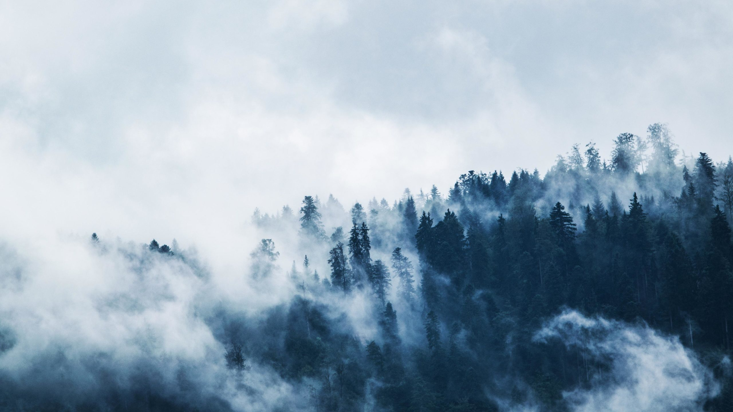 Download Green Pine Trees Covered With Fogs Under White Sky Wallpaper