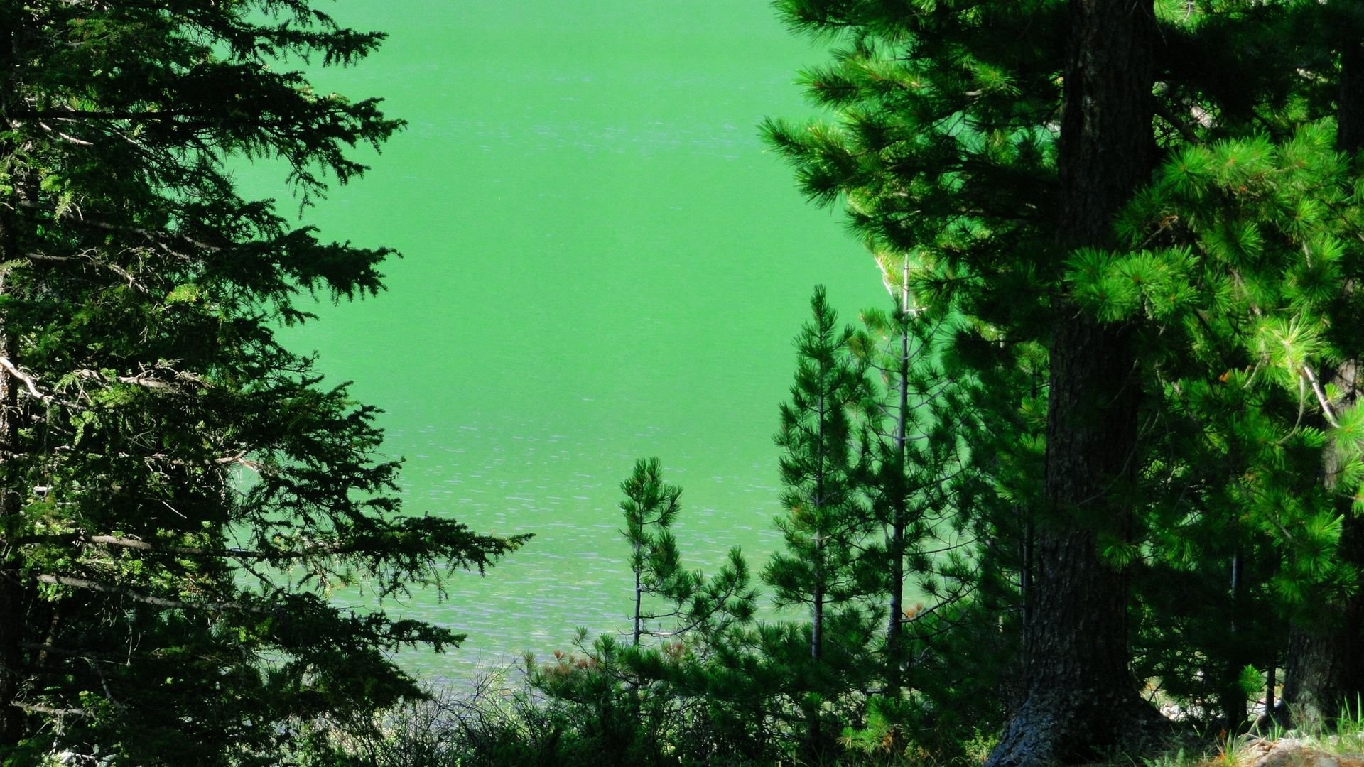 Download Green River