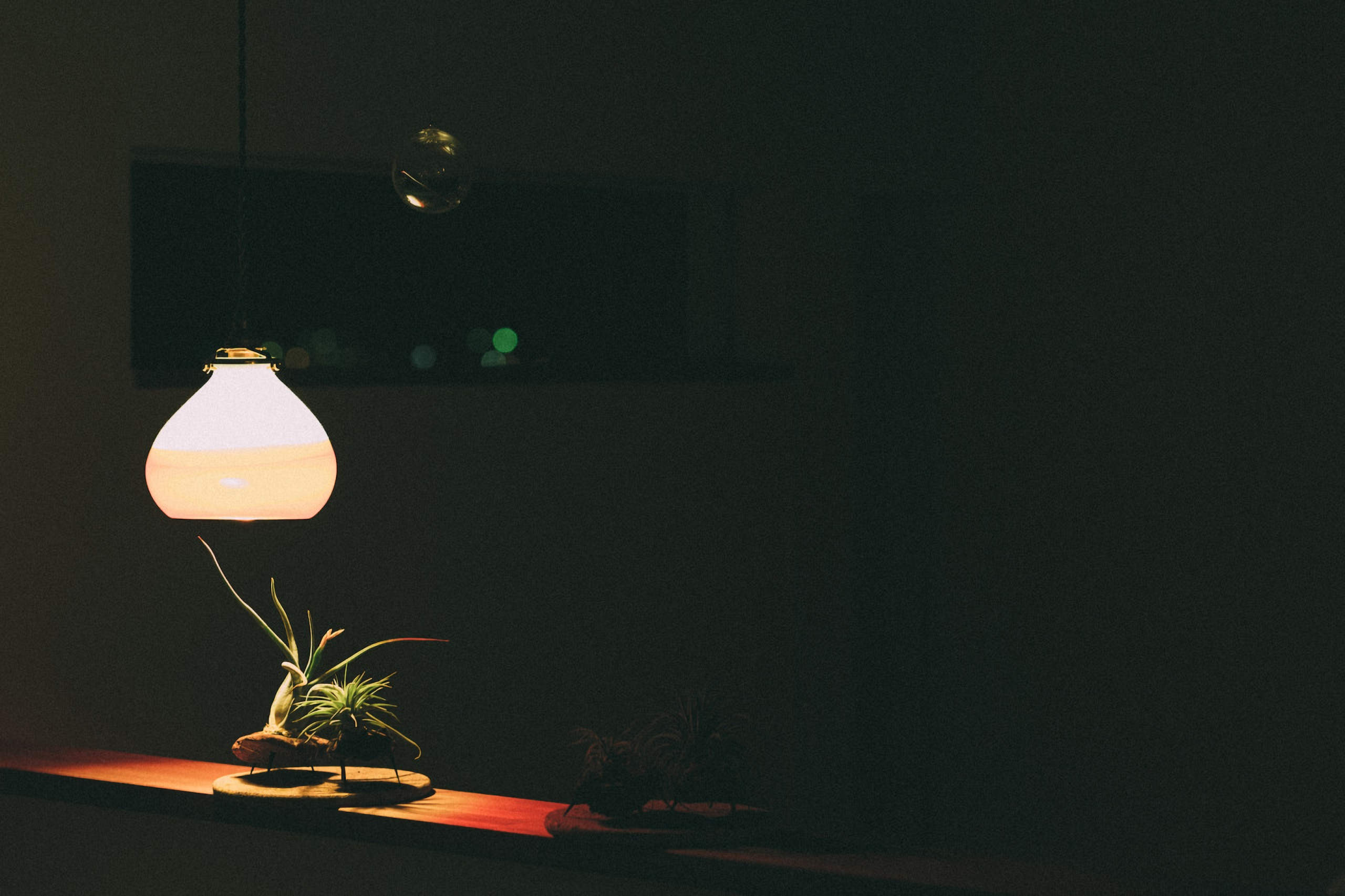 Download Light On A Plant