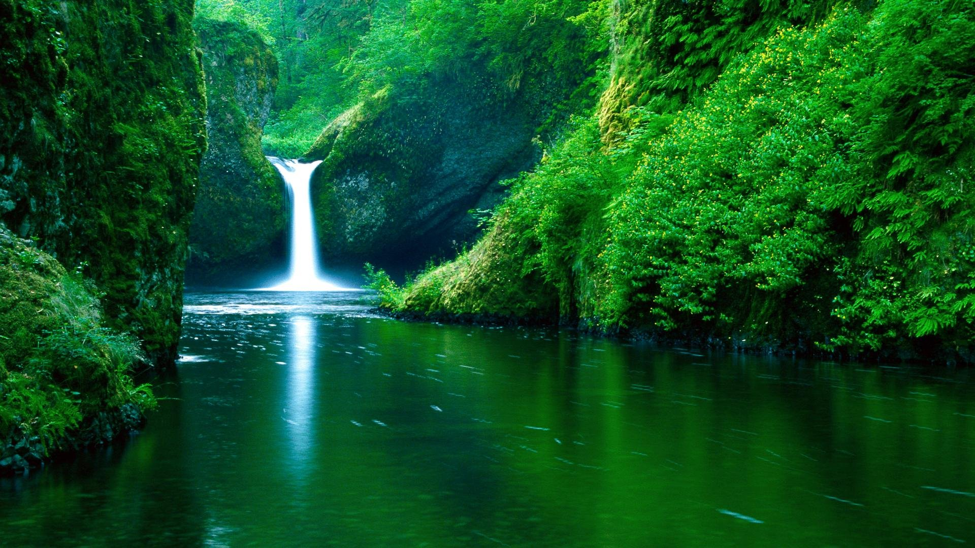 Download Lush Green Beauty Of Nature