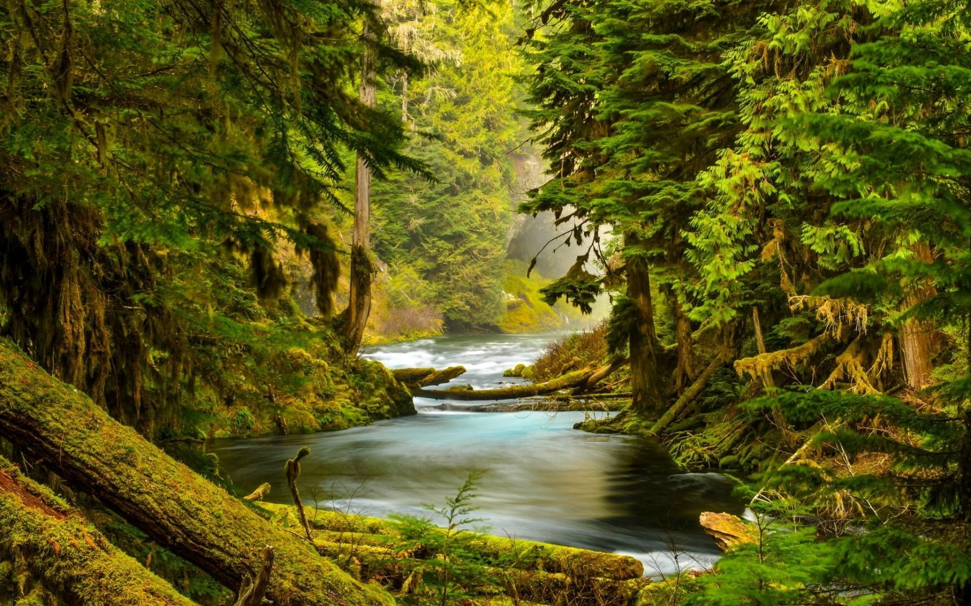 Download Mossy Forest Wallpaper