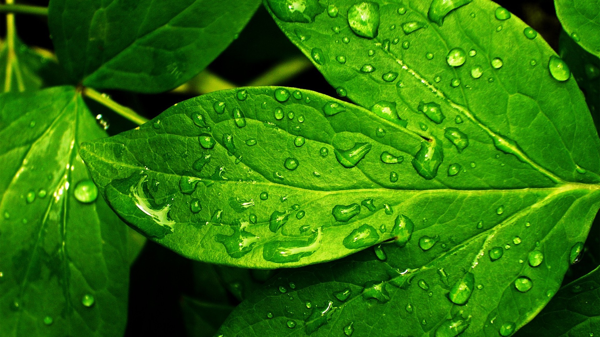 Download Nature Leaf And Backgrounds Green Fresh X For Your 356695