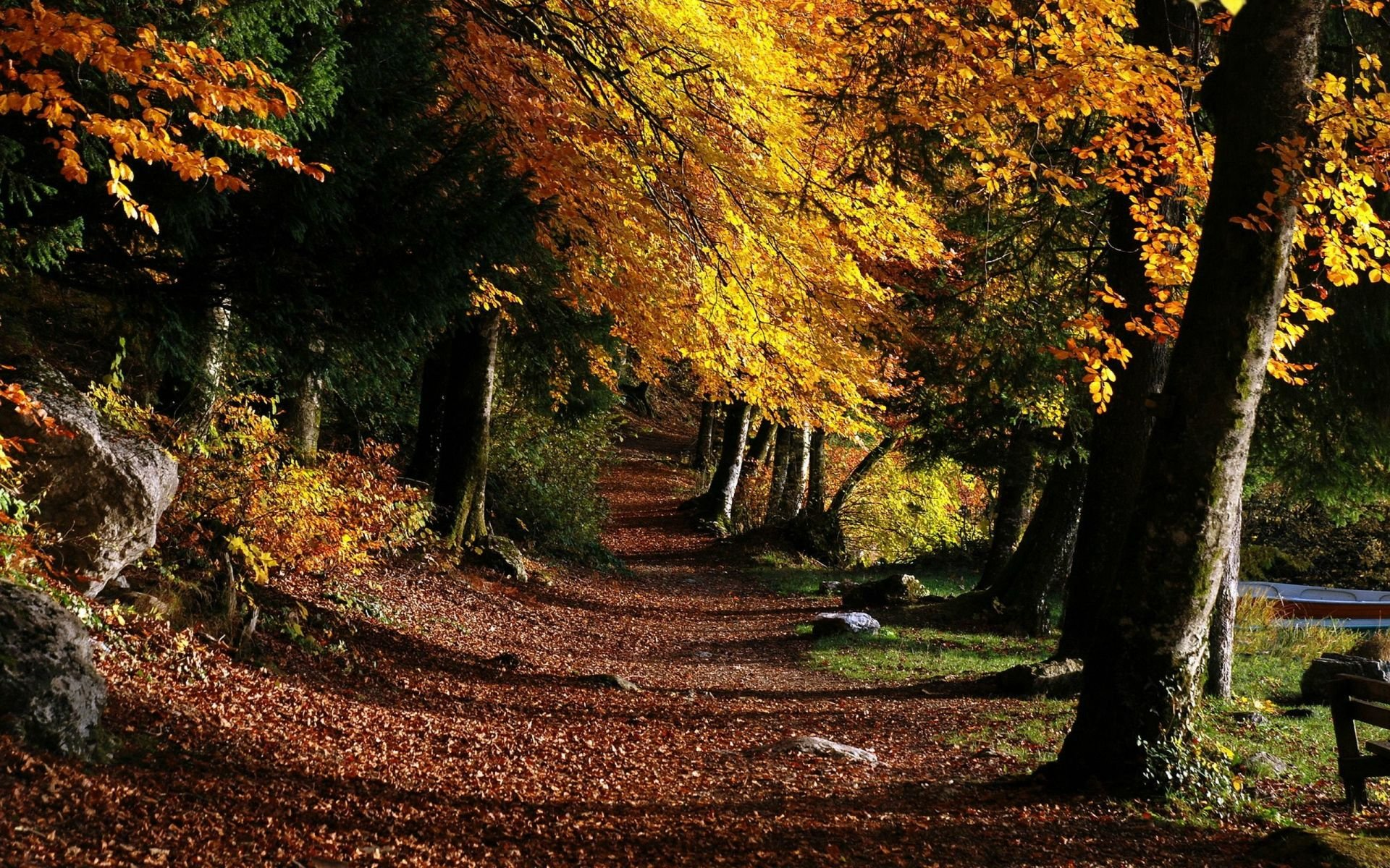 Download Park Footpath Forest Trees Leaves Wallpaper