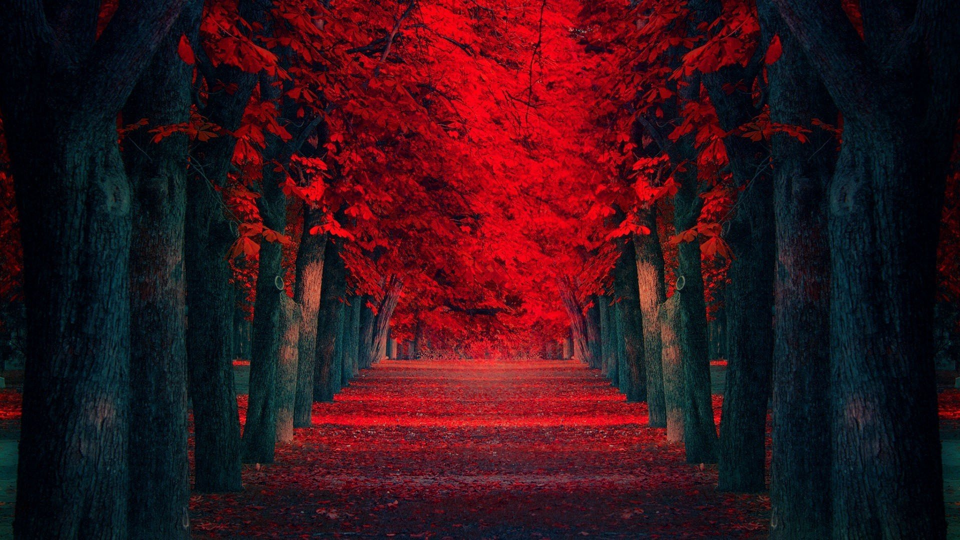 Download Row Of Red Trees