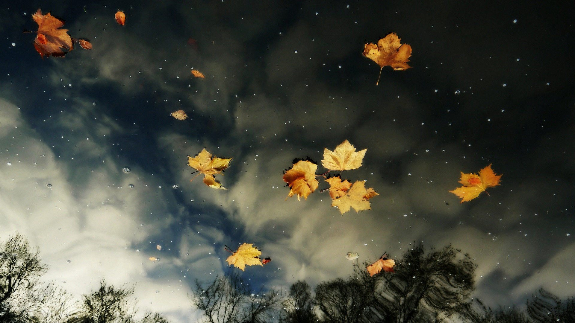Download Sky Reflection In River With Leaves