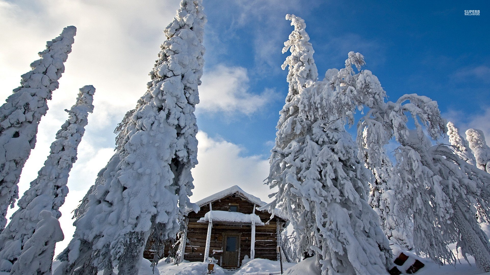 Download Snowy Trees Guarding The Snowy Wooden Hut