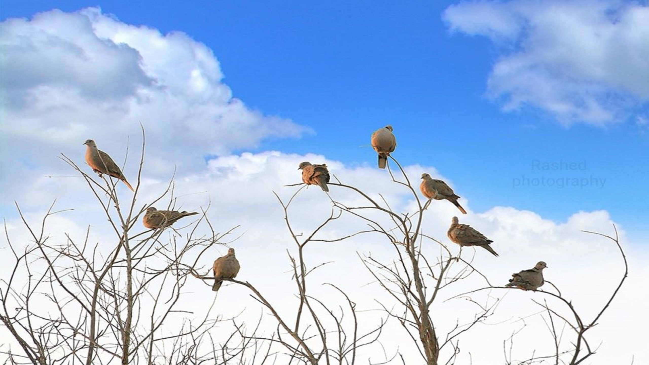 Download The Combination Of Birds And The Sky Wallpaper