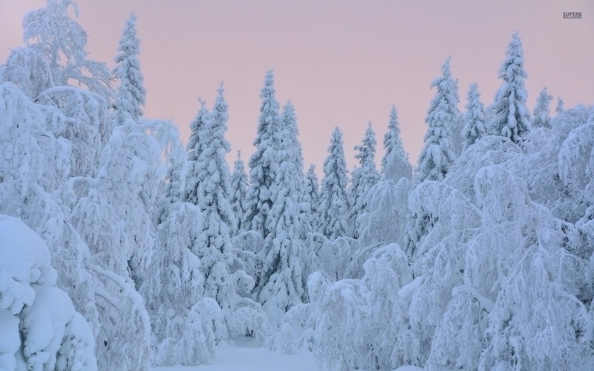 Download Thick Snow On Trees