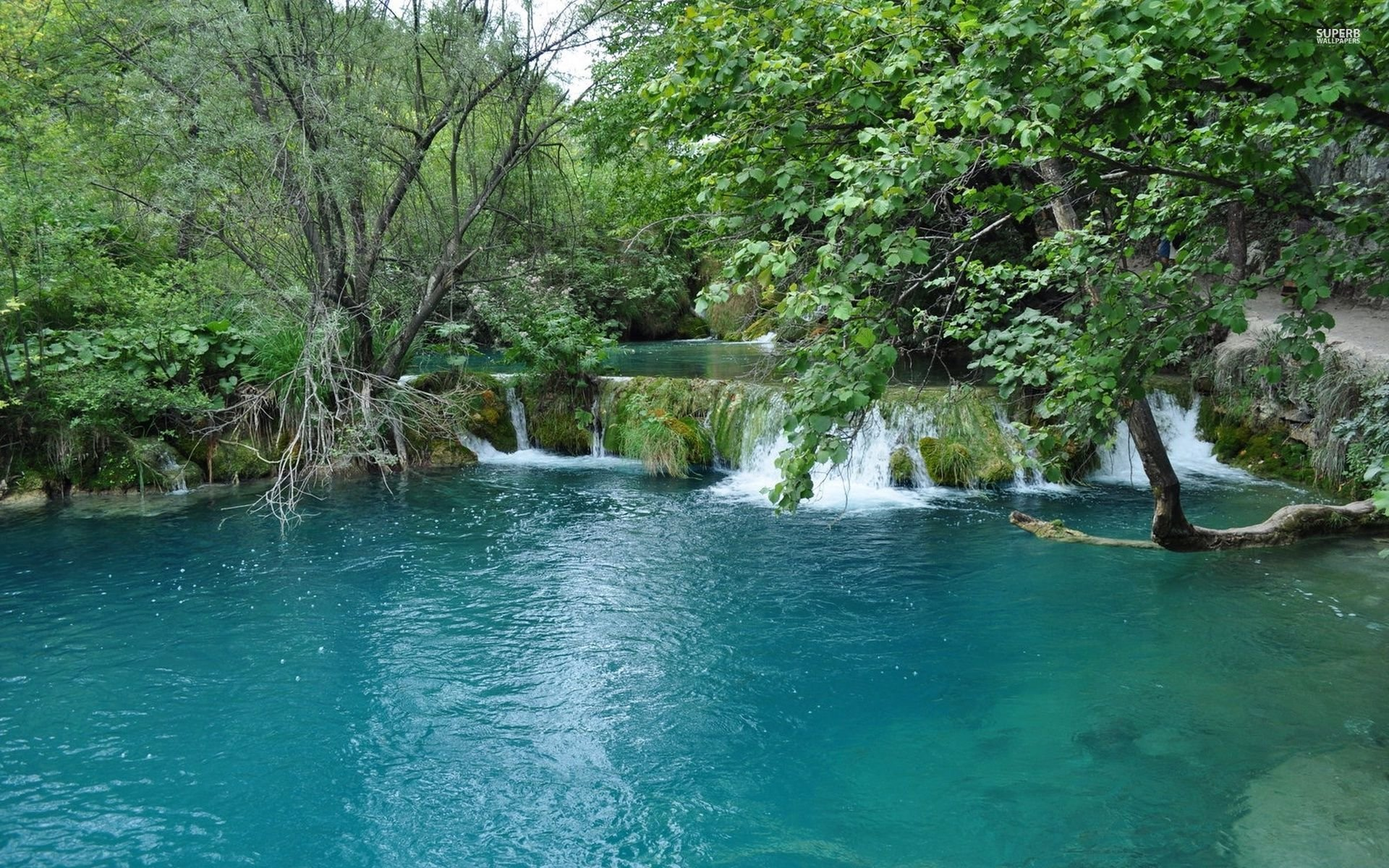 Download Turquoise Lake In The Forest Wallpaper